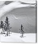 Pines In Snow Drifts Black And White Canvas Print