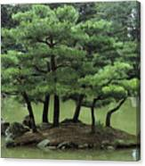 Pines On Island In The Gardens Canvas Print