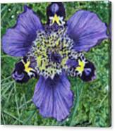 Pinewoods Lily Canvas Print