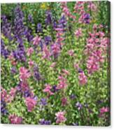 Pink And Lavender Canvas Print