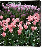 Pink And Mauve Tulips Canvas Print