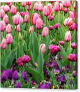 Pink And Purple Tulips At The Spring Floriade Festival Canvas Print