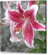 Pink And White Stargazer Lily In A Garden Canvas Print