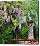 Pink And White Wisterias Canvas Print