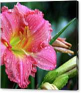 Pink And Yellow Lily After Rain Canvas Print