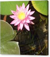 Pink And Yellow Lotus Flower Canvas Print