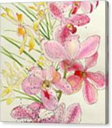 Pink And Yellow Orchids Canvas Print