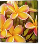 Pink And Yellow Plumeria 2 Canvas Print