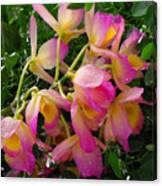 Pink And Yellow Tropical Flowers Canvas Print