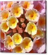 Pink And Yellows Canvas Print