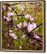 Pink Aplle Blossoms Of Spring Time Canvas Print