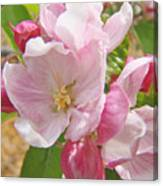 Pink Apple Blossoms Art Prints Spring Trees Baslee Troutman Canvas Print