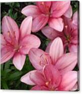 Pink Asiatic Lilies 2 Canvas Print