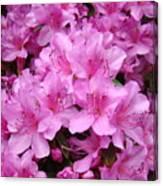 Pink Azaleas Summer Garden 6 Azalea Flowers Giclee Art Prints Baslee Troutman Canvas Print