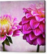 Pink Beauties Canvas Print