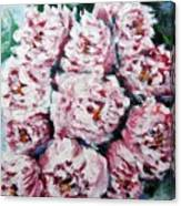 Pink Beauties Canvas Print