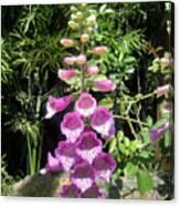 Pink Bell Flowers. Foxglove 03 Canvas Print