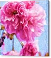 Pink Bellos Canvas Print