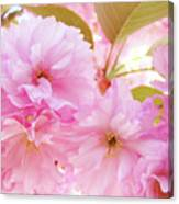 Pink Blossoms Art Prints Canvas Spring Tree Blossoms Baslee Troutman Canvas Print