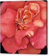 Pink Blush Canvas Print
