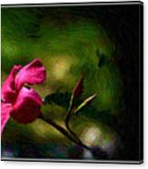Pink Bud Canvas Print