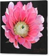 Pink Cactus Flower Canvas Print