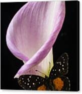 Pink Calla Lily With Butterfly Canvas Print