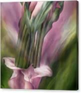Pink Callas In Calla Vase Canvas Print