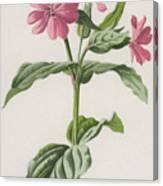 Pink Campion Canvas Print