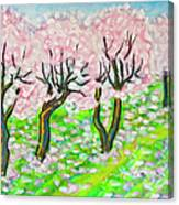 Pink Cherry Garden In Blossom Canvas Print