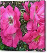 Pink Climbing Roses - Digitally Enhanced Canvas Print