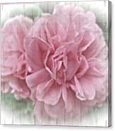 Pink Climbing Roses Canvas Print