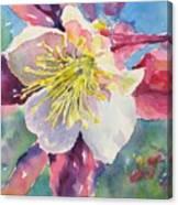 Pink Columbine Canvas Print
