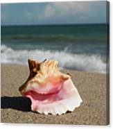 Pink Conch  Canvas Print