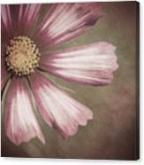Pink Cosmos Painting Canvas Print