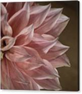 Pink Dahlia In Bloom Canvas Print
