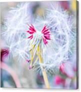 Pink Dandelion Canvas Print