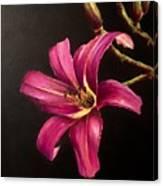Pink Daylily Canvas Print