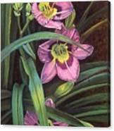 Pink Daylilys Canvas Print