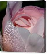 Pink Dew Canvas Print