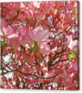 Pink Dogwood Flowering Tree Art Prints Canvas Baslee Troutman Canvas Print