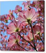 Pink Dogwood Flowers Landscape 11 Blue Sky Botanical Artwork Baslee Troutman Canvas Print