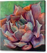 Pink Echeveria Canvas Print