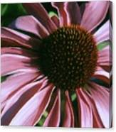 Pink Echinacea Canvas Print