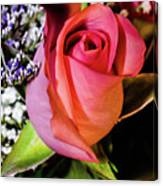 Pink Eye Rose Canvas Print