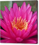 Pink Flame Waterlily Canvas Print