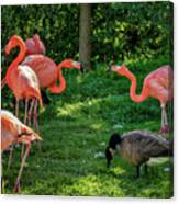 Pink Flamingos And Imposters Canvas Print