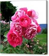 Pink Floribunda Roses Canvas Print