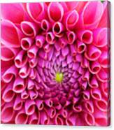 Pink Flower Close Up Canvas Print