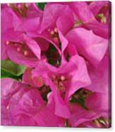 Pink Flower Composition Canvas Print